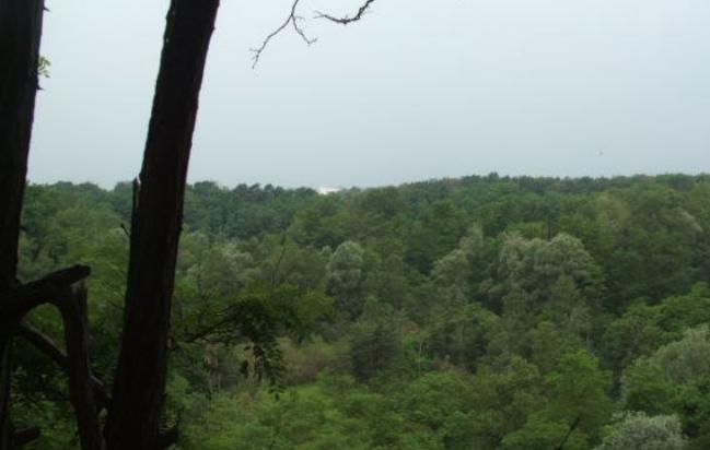 Quindi un bosco non di nessuno ma per tutti. Una scelta culturale per le generazioni che verranno. Brughiera il bosco di tutti bilancio partecipativo