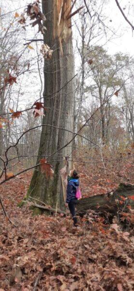 Per i boschi di Cardano. Novembre 2020, il presidente della Casa del Popolo ci racconta la sua camminata tra storia e natura